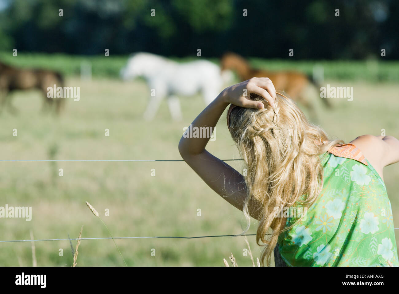 Young woman with hand in hair looking at horses in rural field, rear view - Stock Image