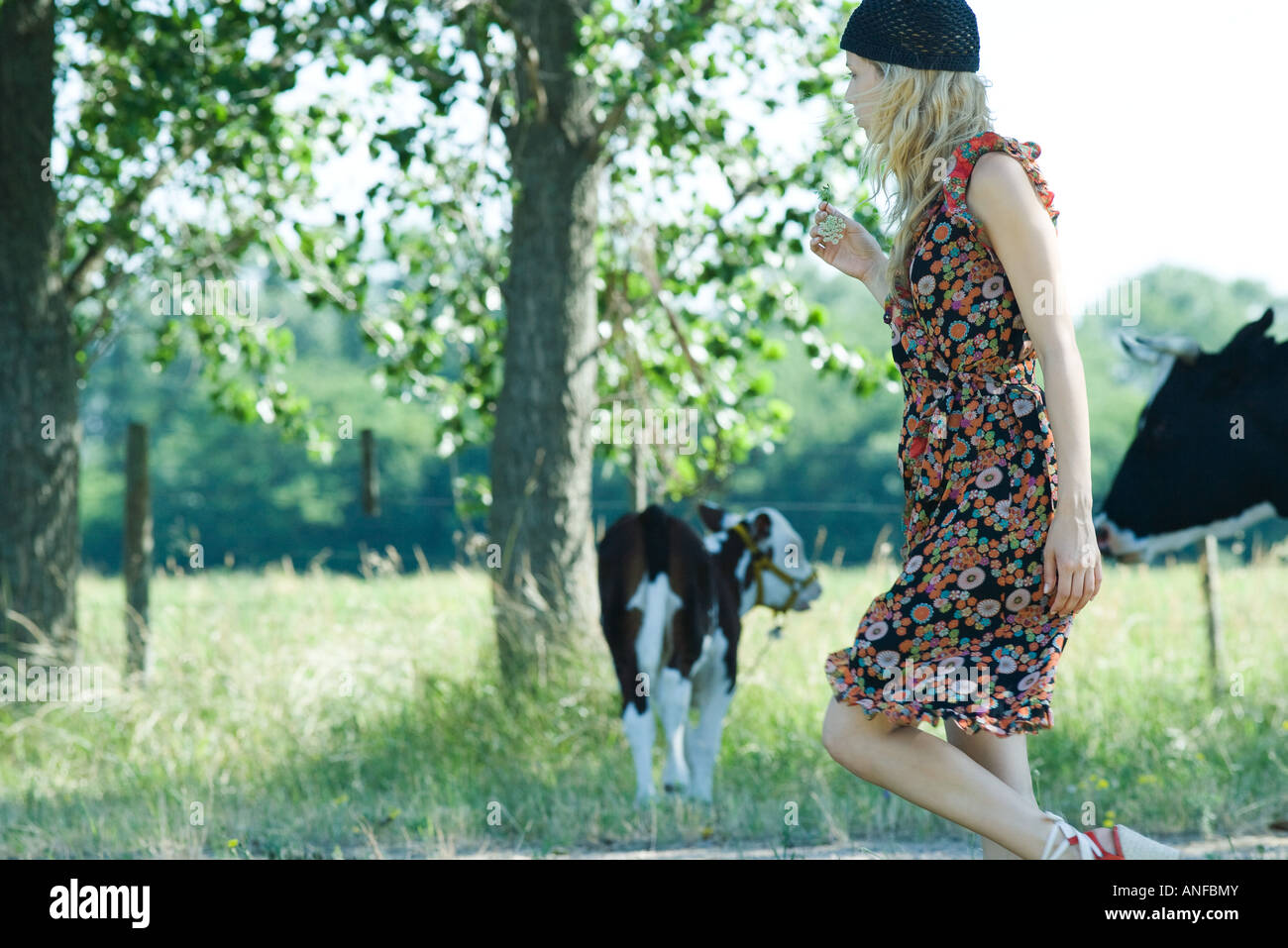 Young woman walking past cows, side view - Stock Image