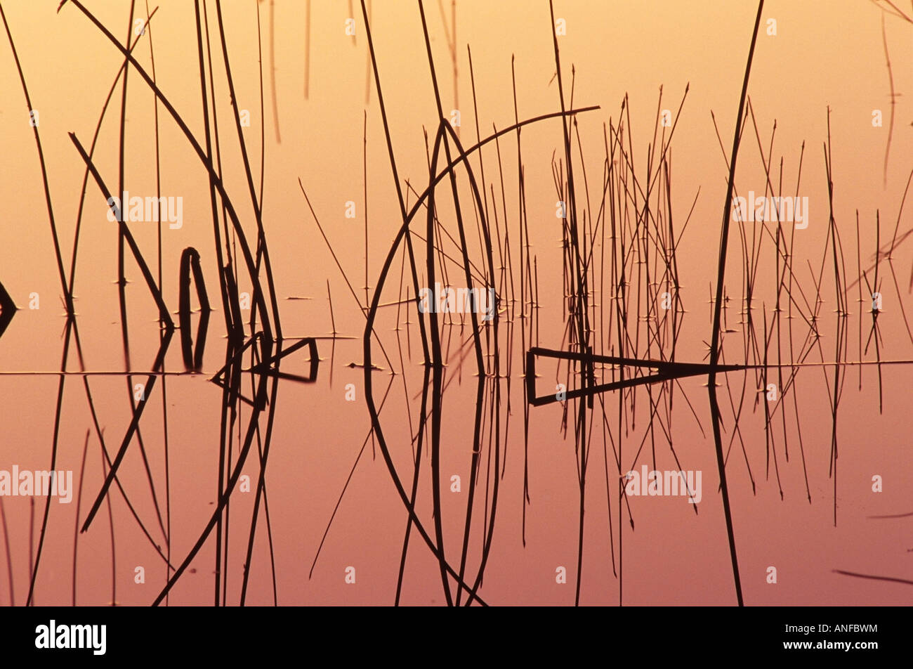 reed patterns on childs lake, duck mountain provincial park, manitoba, Canada. - Stock Image