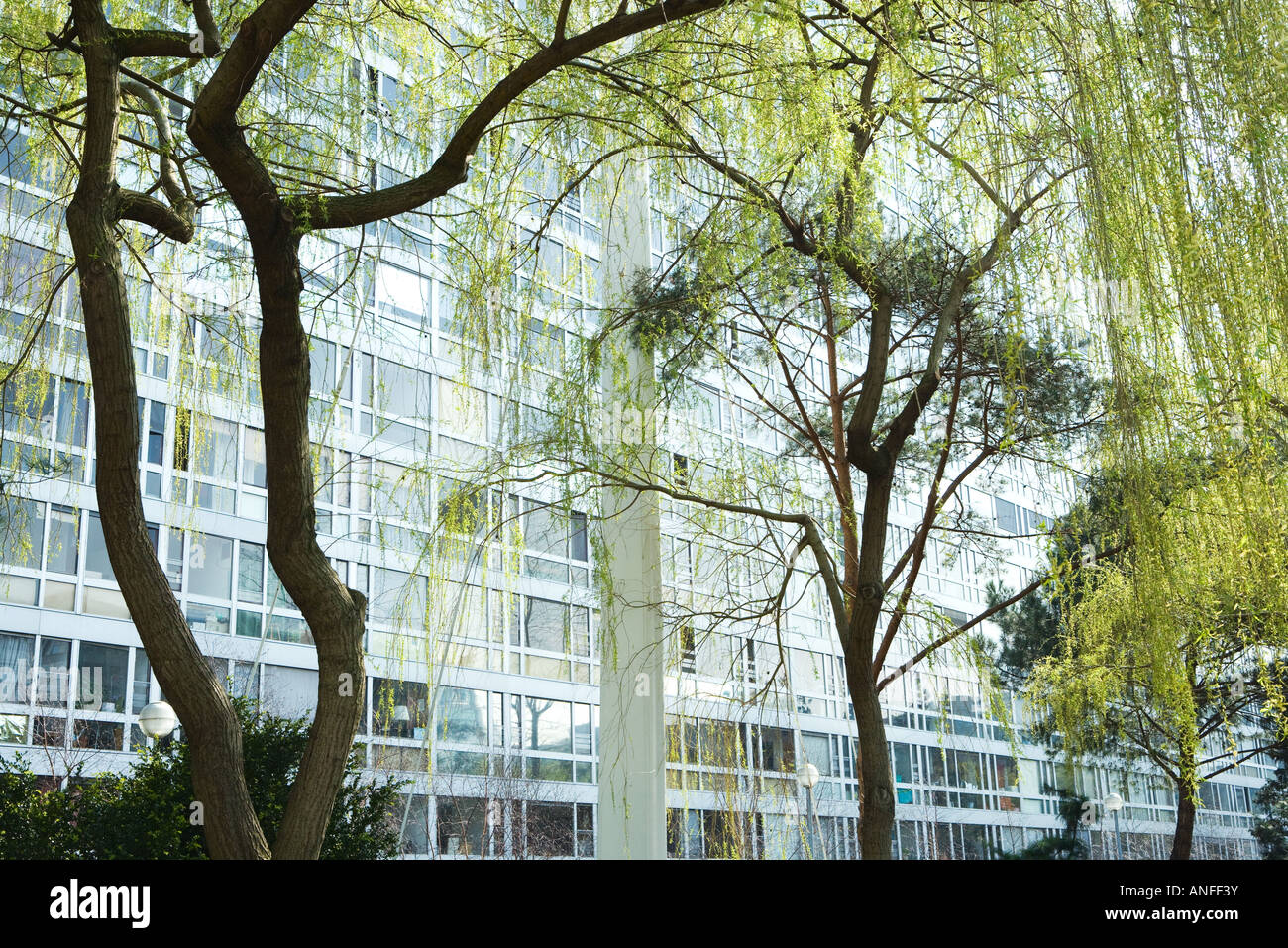 Trees and office building - Stock Image