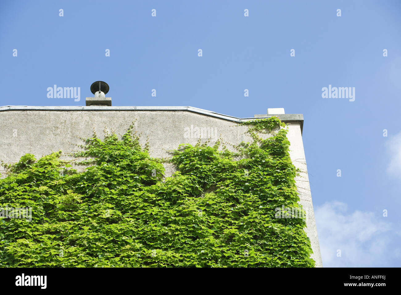 Vine growing on side of building Stock Photo