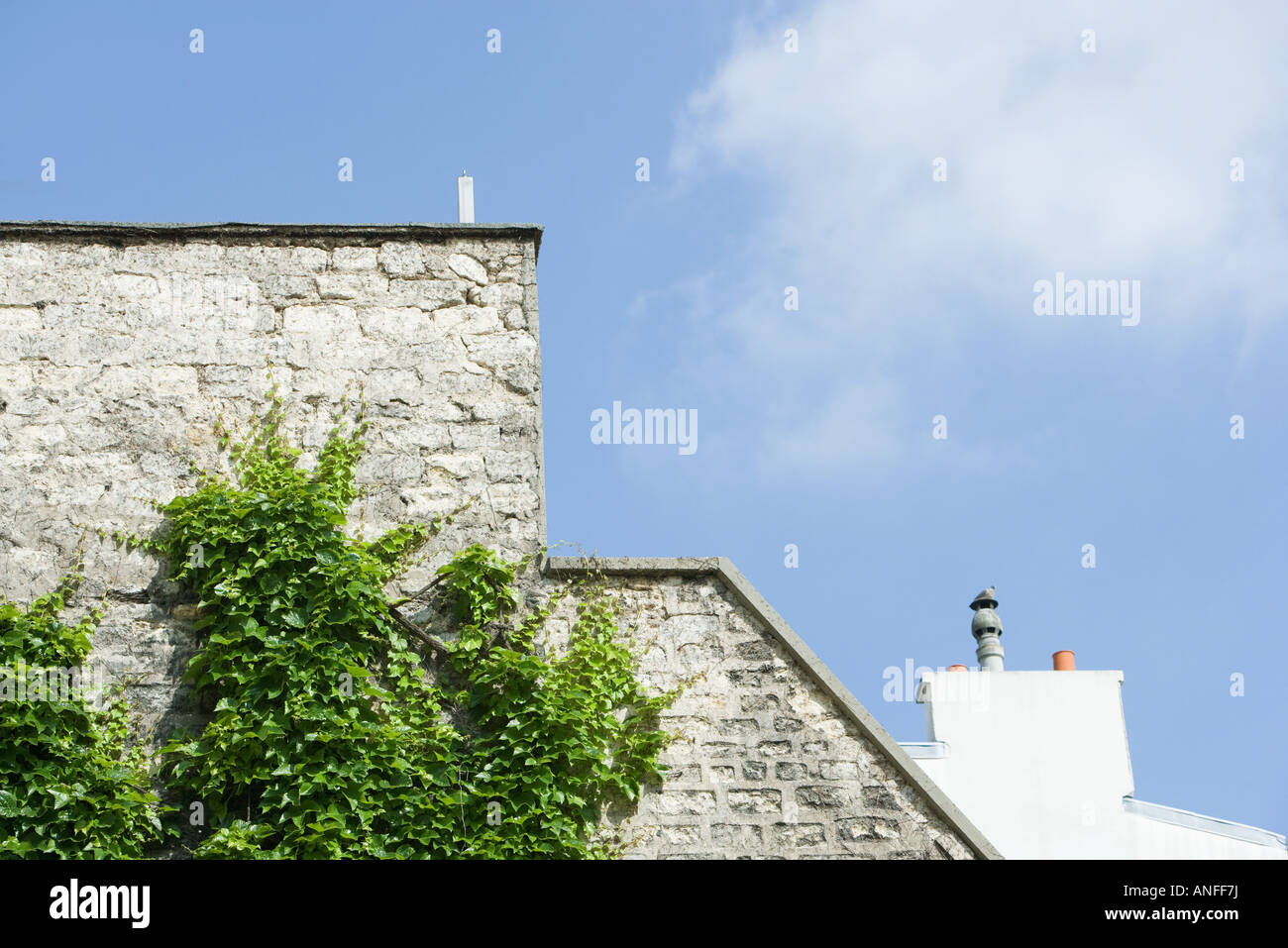 Vine growing on side of building - Stock Image