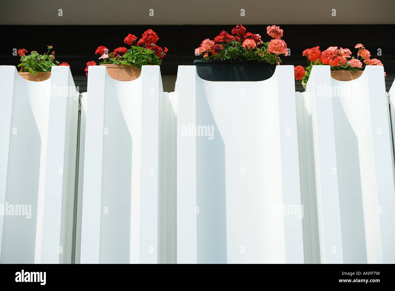 Geraniums in window boxes Stock Photo