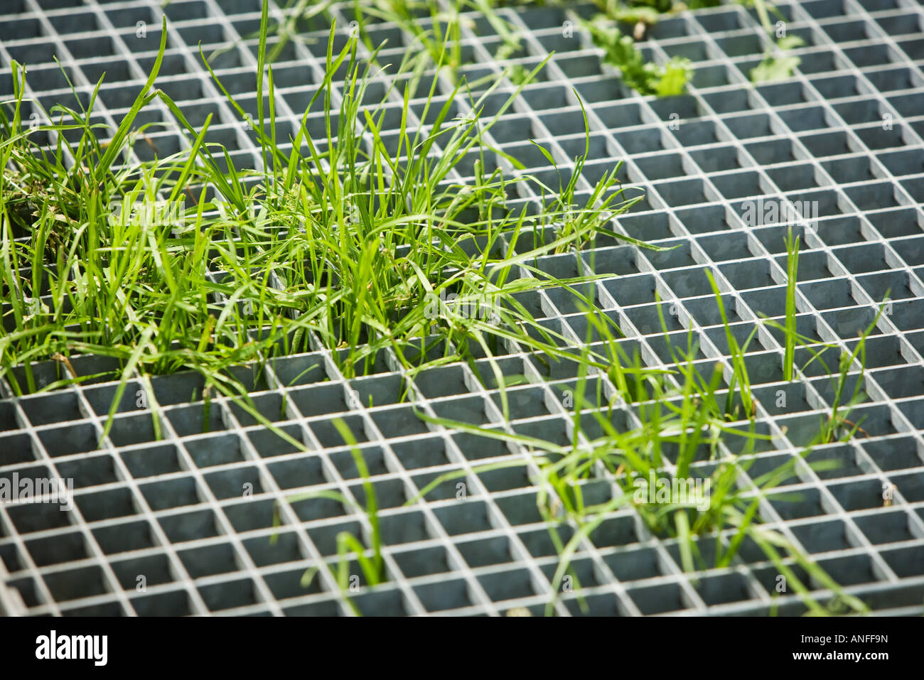 Grass growing through metal grate - Stock Image