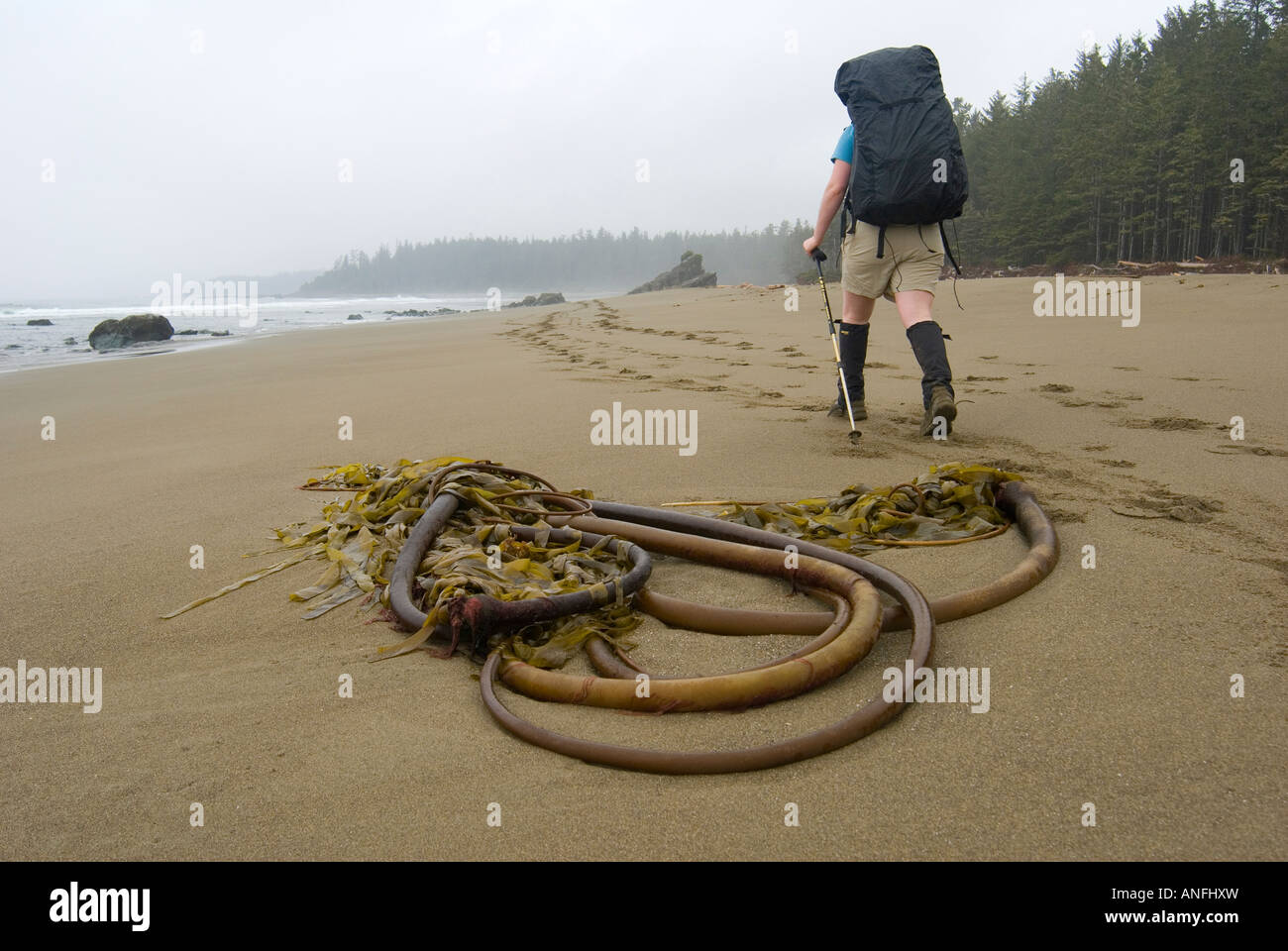 Sandy Beach near Coal and Cribs Creeks, West Coast Trail, Pacific Rim National Park, Vancouver Island, british columbia, - Stock Image