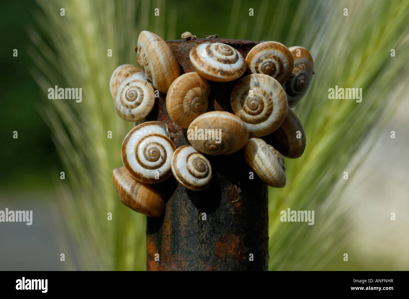 Snails on top of iron post. - Stock Image