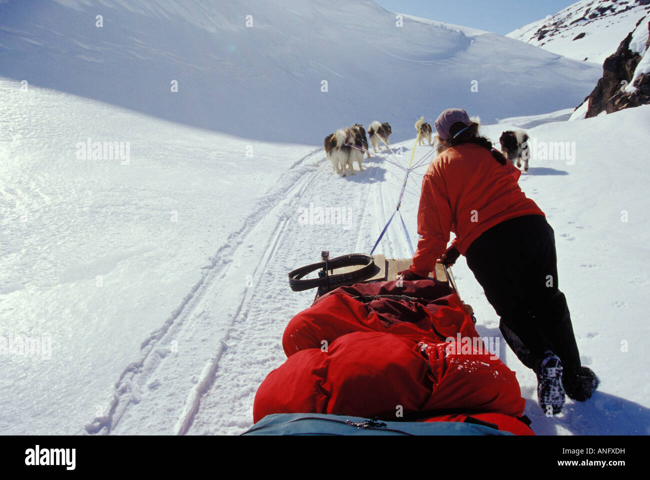 Young woman drives dogsled team across Meta Incognita Penninsula in early May, Baffin Island, Nunavut, Canada. - Stock Image