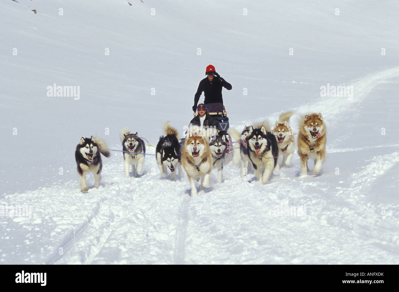 Young couple drive dogsled team across Meta Incognita Penninsula in early May, Baffin Island, Nunavut, Canada. - Stock Image