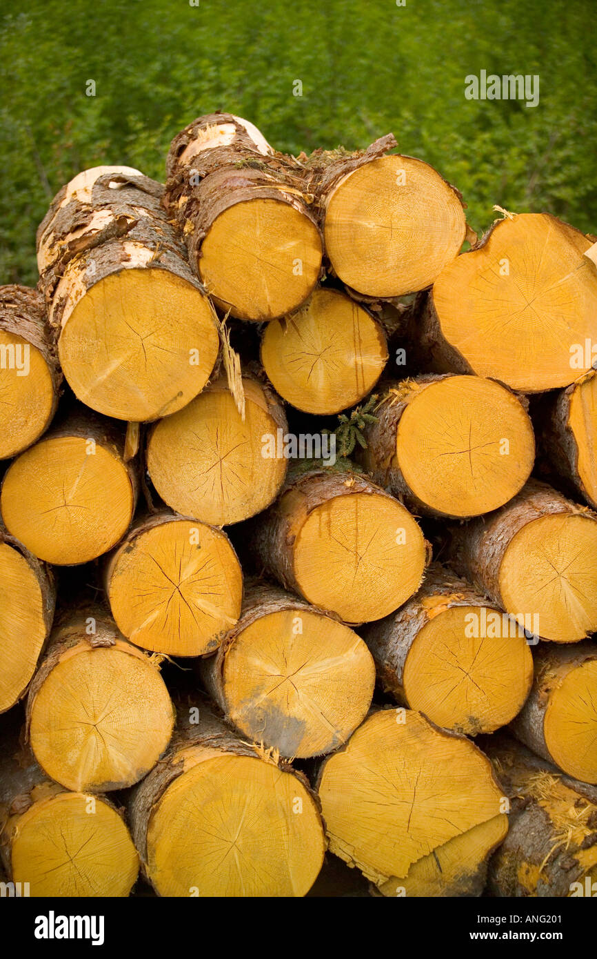 Stacked Tree Logs near Torsby in Varmland County Sweden Stock Photo