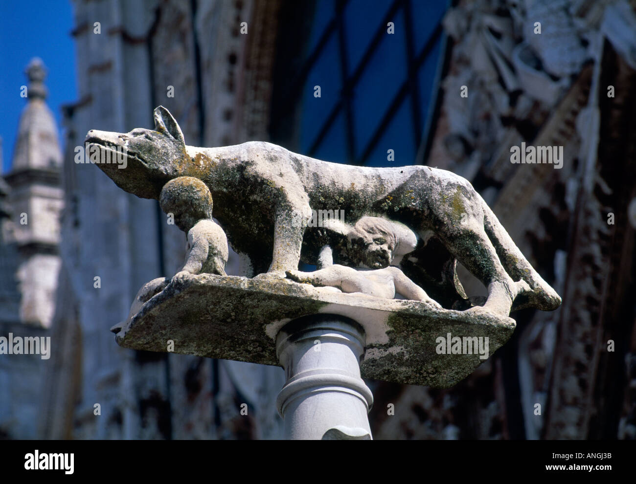 Romulus and Remus with wolf statue in Siena - Stock Image