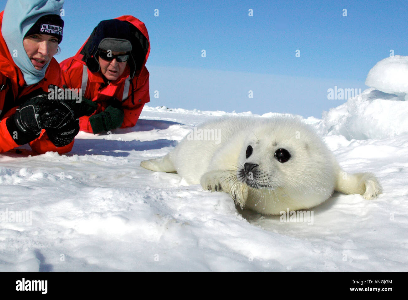 Heather and Paul McCartney on the Ice to Protect Harp Seals with the Humane Society of the United States before - Stock Image