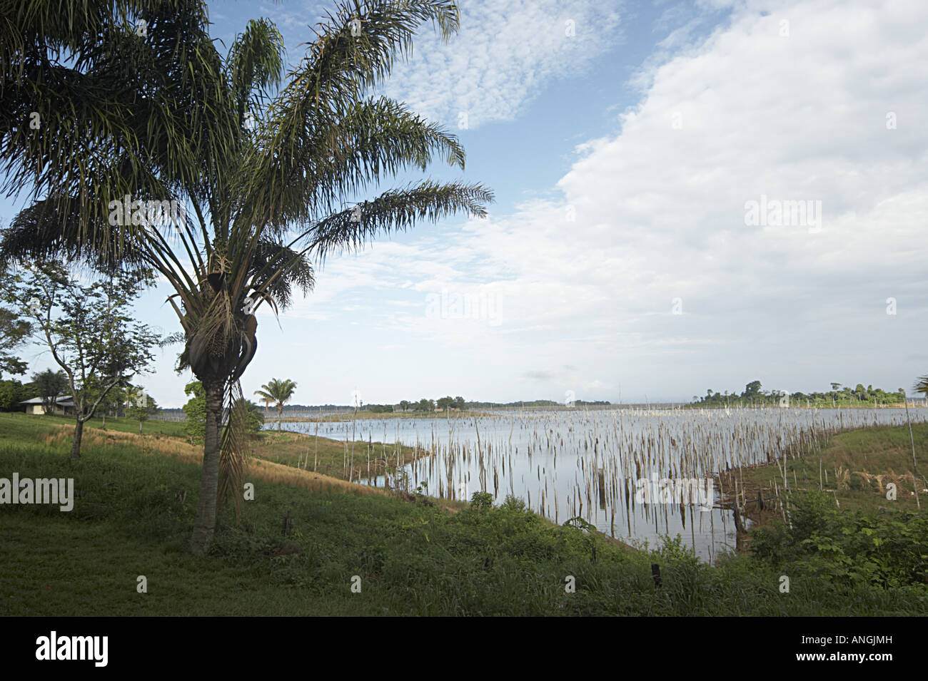 The Brokopondo reservoir in the interior of Suriname as seen from the Maroon village of Lebidoti. - Stock Image