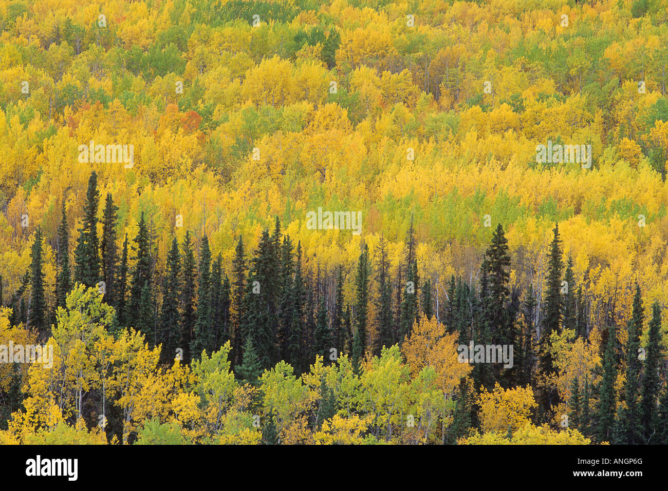Fall Colours along Robert Campbell Highway, Yukon Territory, Canada. - Stock Image