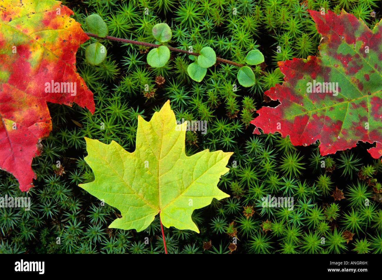 Leaves Change Stock Photos & Leaves Change Stock Images - Alamy