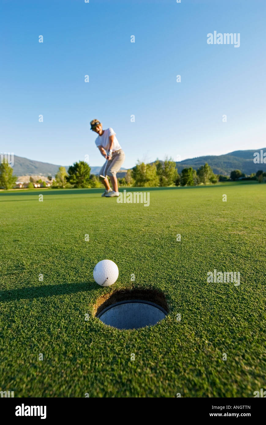 A lady golfer watches her ball with anticipation just before it drops into the cup, on a course near Kamloops, British - Stock Image
