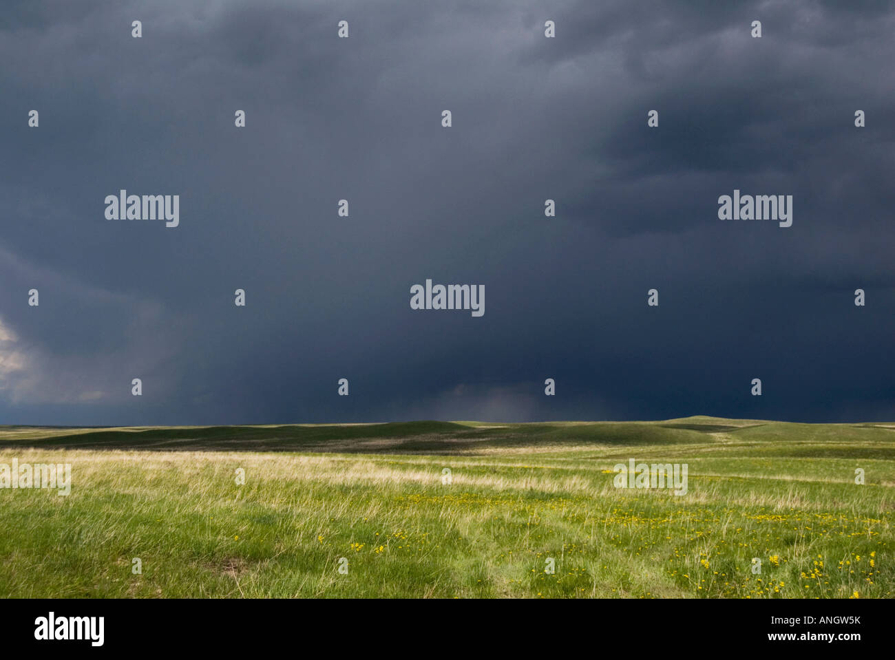 Prairie Storm. A heavy dark rain cloud is the result of a violent disturbance of the atmosphere with strong winds - Stock Image