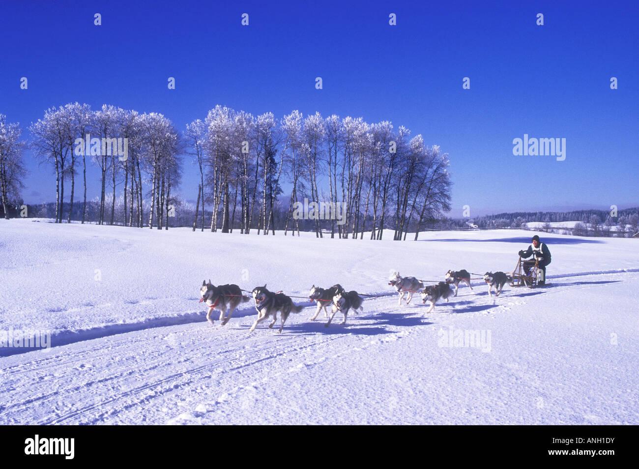Dogsledding in the Cariboo region of British Columbia, Canada. - Stock Image