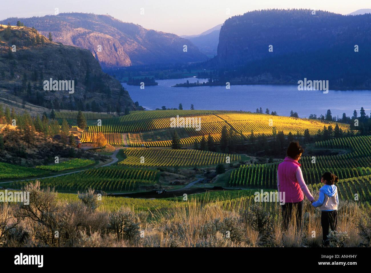 Blue Mountainvineyardsinautumn, Okanagan, British Columbia, Canada. - Stock Image