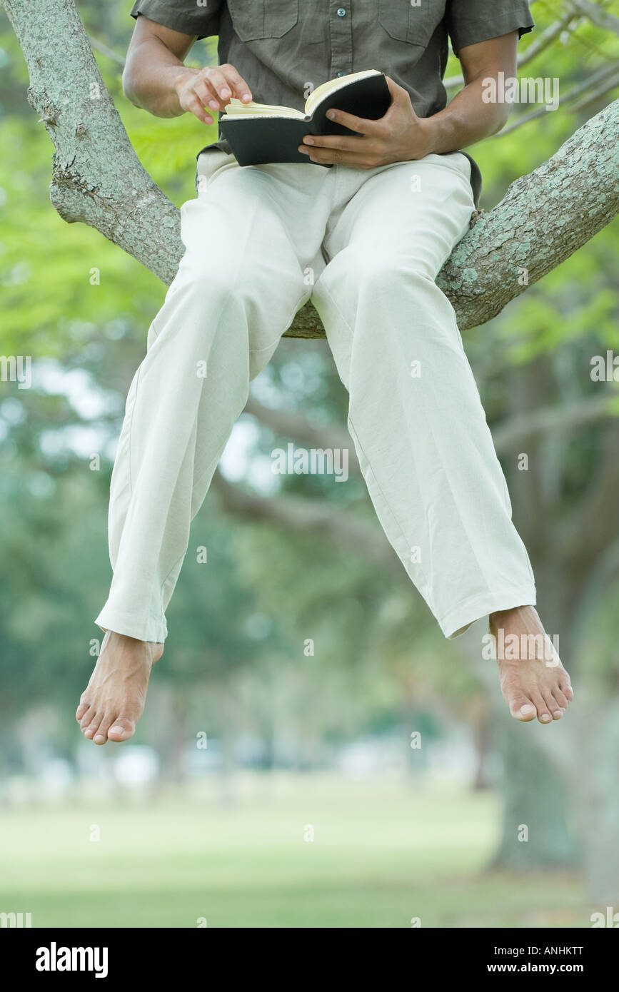 Man sitting in tree reading book with legs dangling, cropped view - Stock Image
