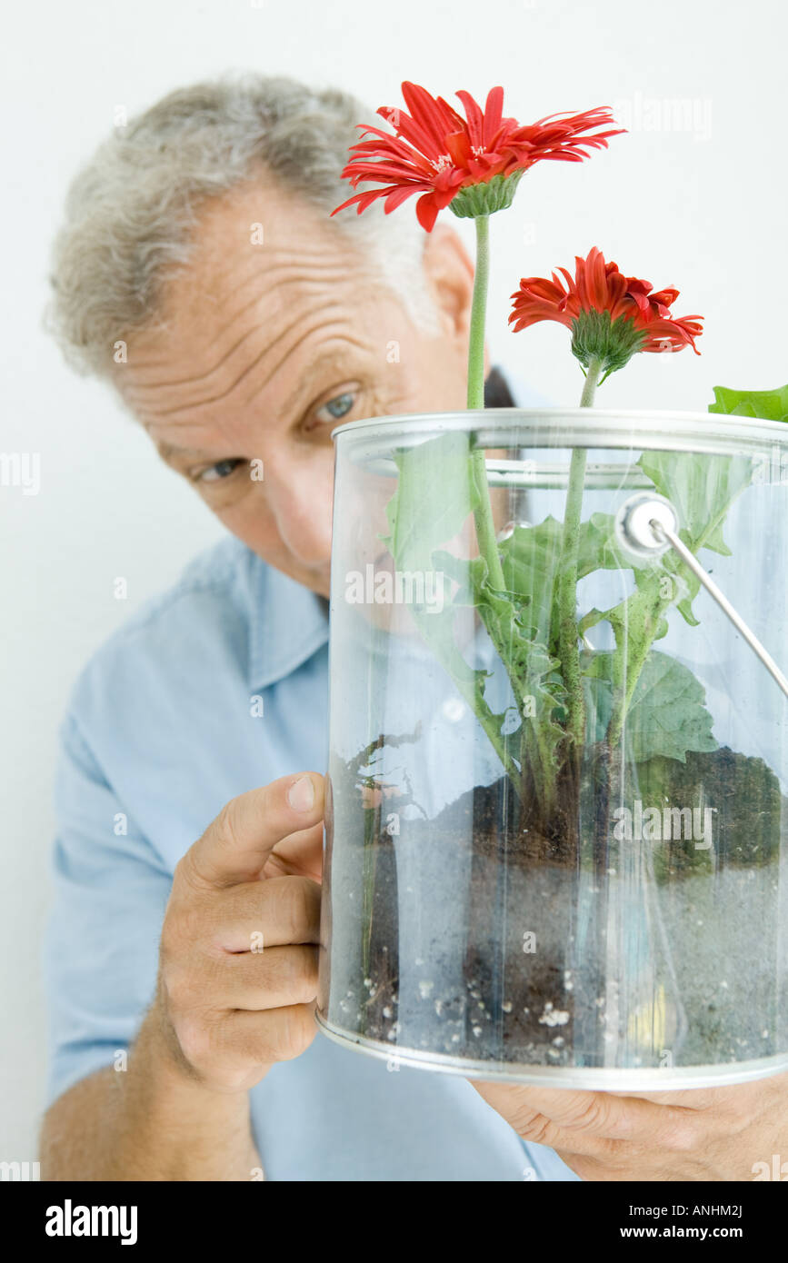 Mature man looking and pointing at flowers growing in bucket - Stock Image