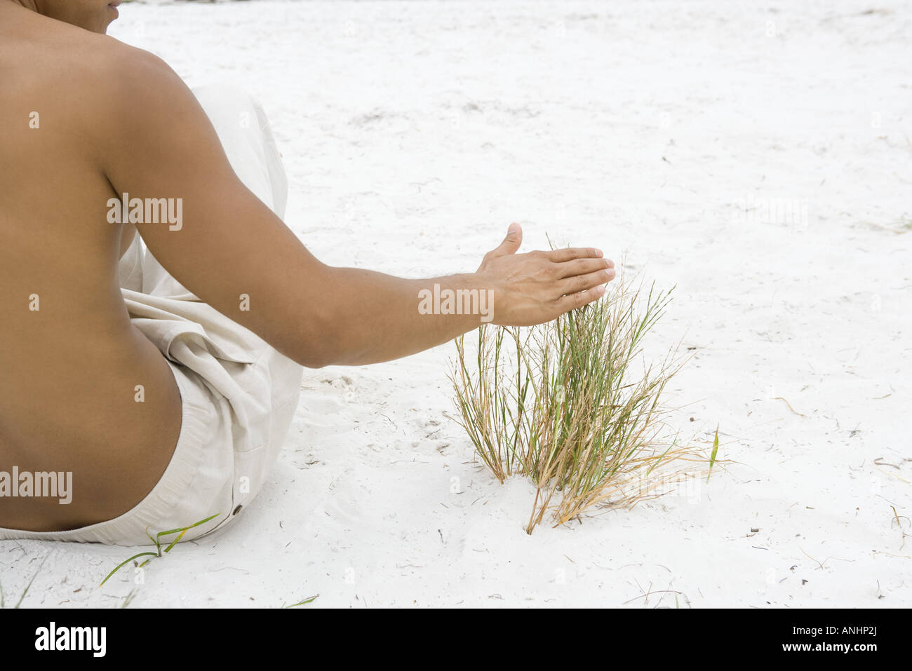 Man sitting in sand touching dune grass, cropped rear view - Stock Image