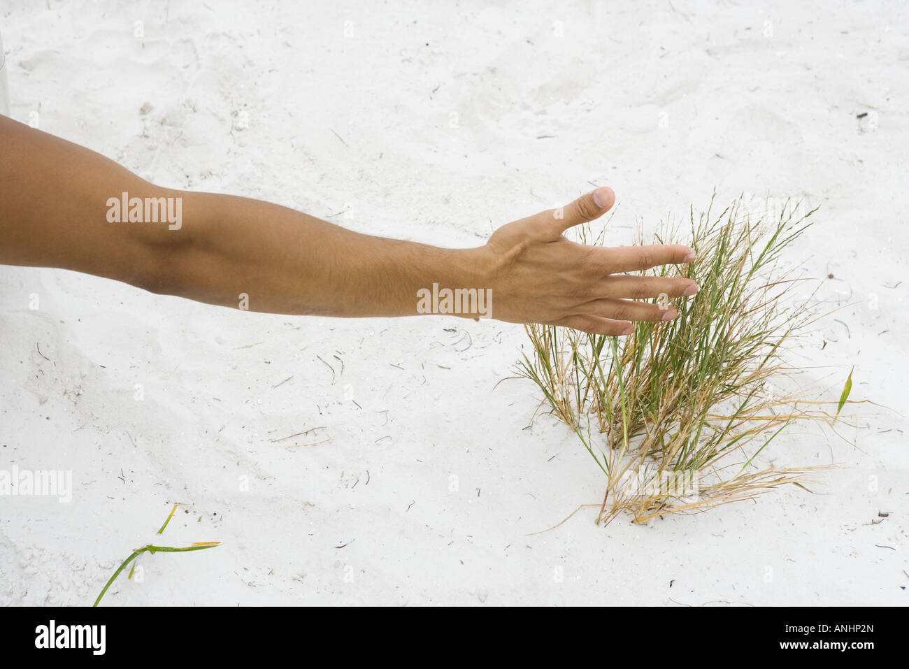 Man touching dune grass, cropped view of arm - Stock Image