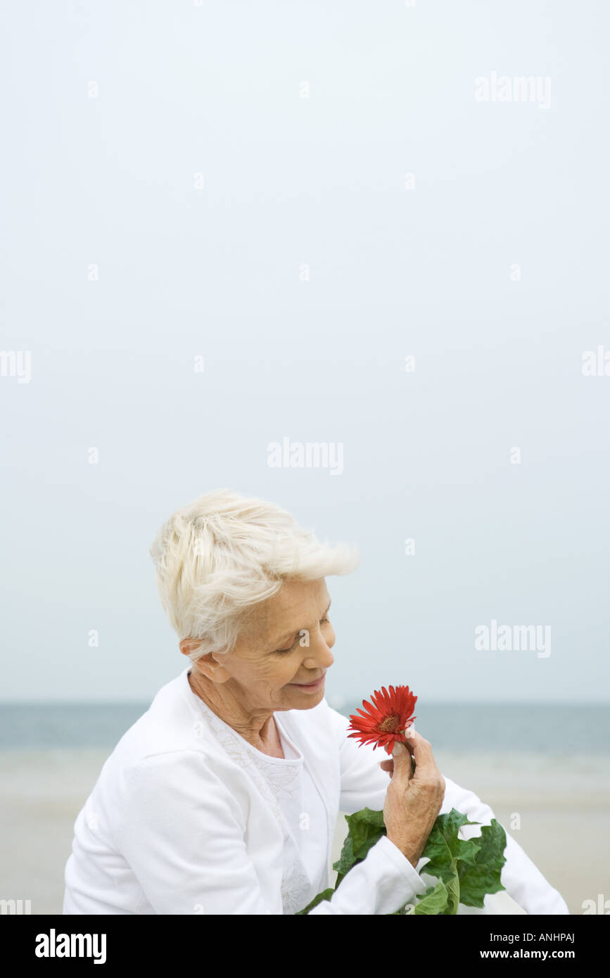 Senior woman holding gerbera daisy, smiling, close-up - Stock Image