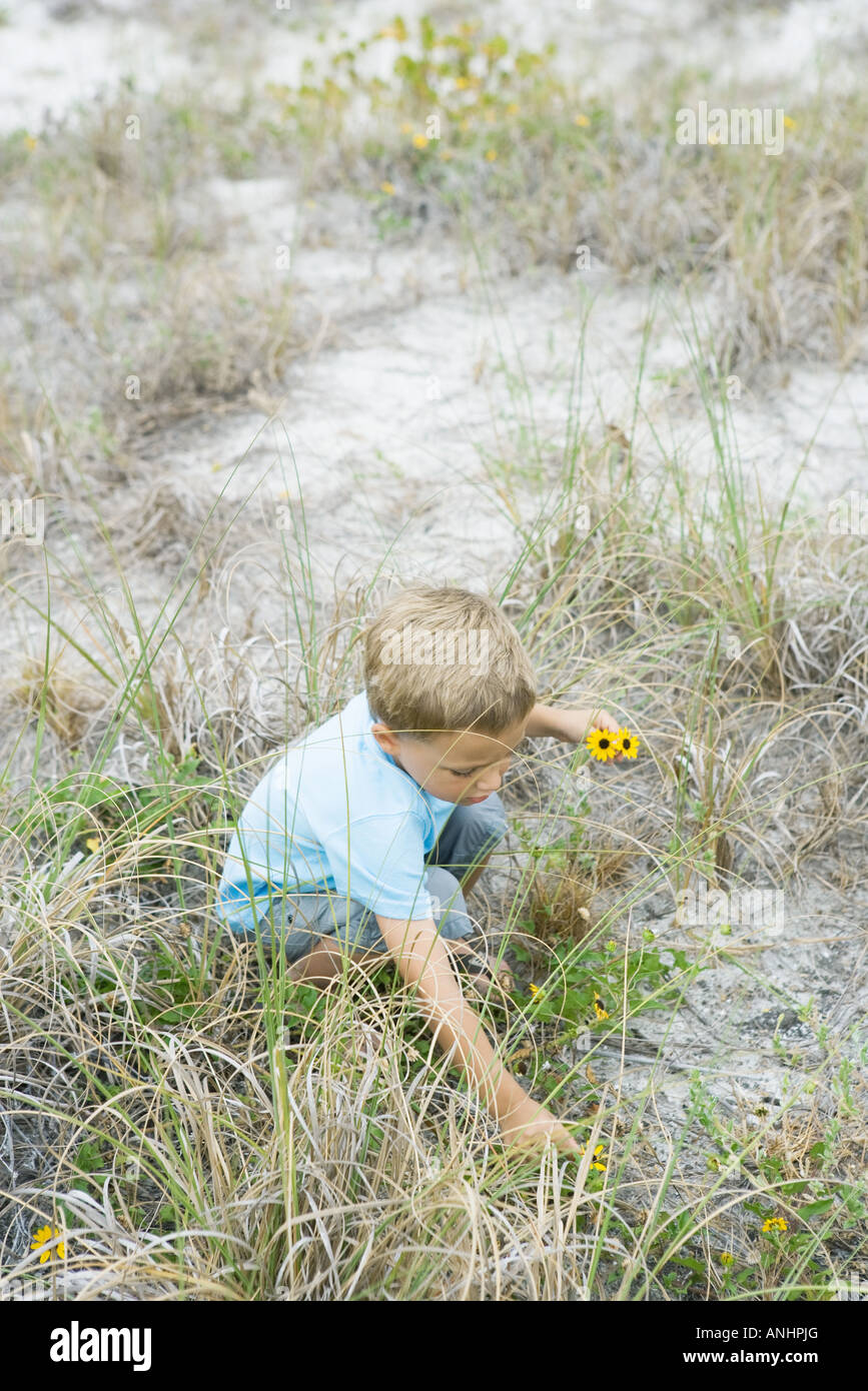 Young boy crouching to pick flowers, high angle view - Stock Image