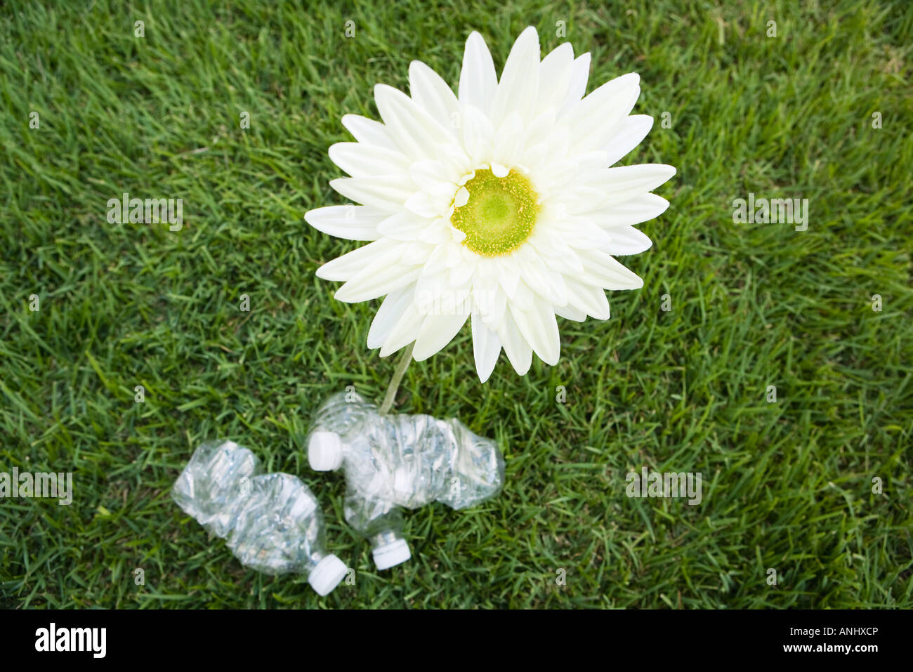 Flower growing next to discarded water bottles, high angle view - Stock Image