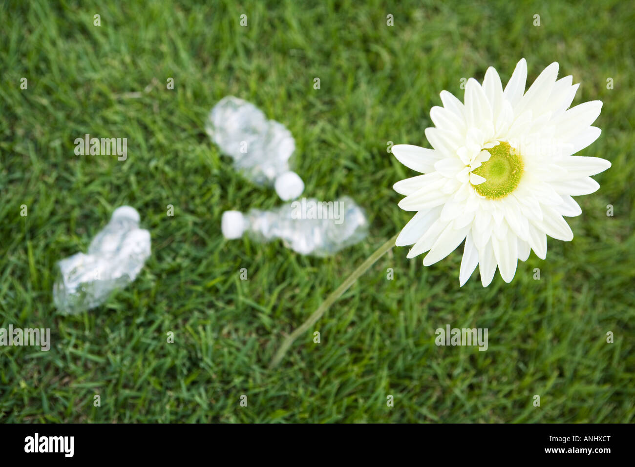 Flower growing next to discarded water bottles, high angle view Stock Photo
