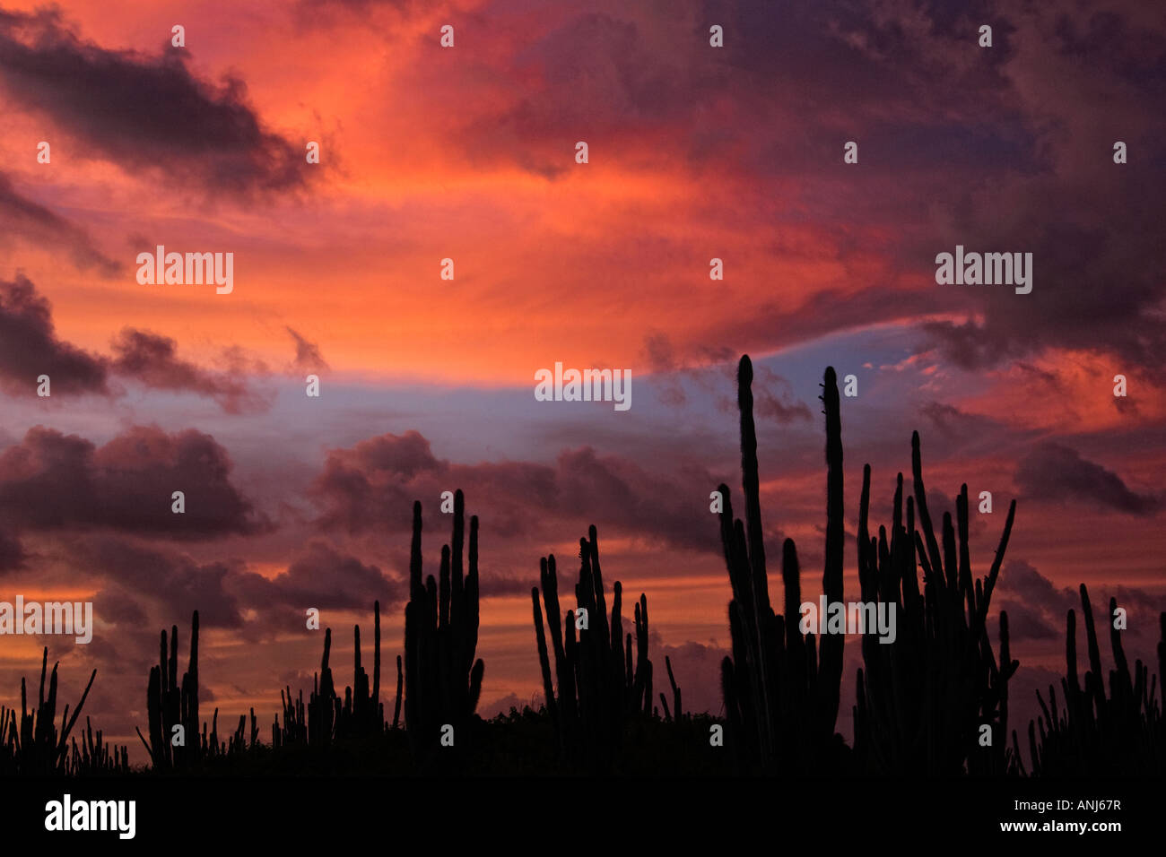 Beautiful warm glow sunset with cactus - Stock Image
