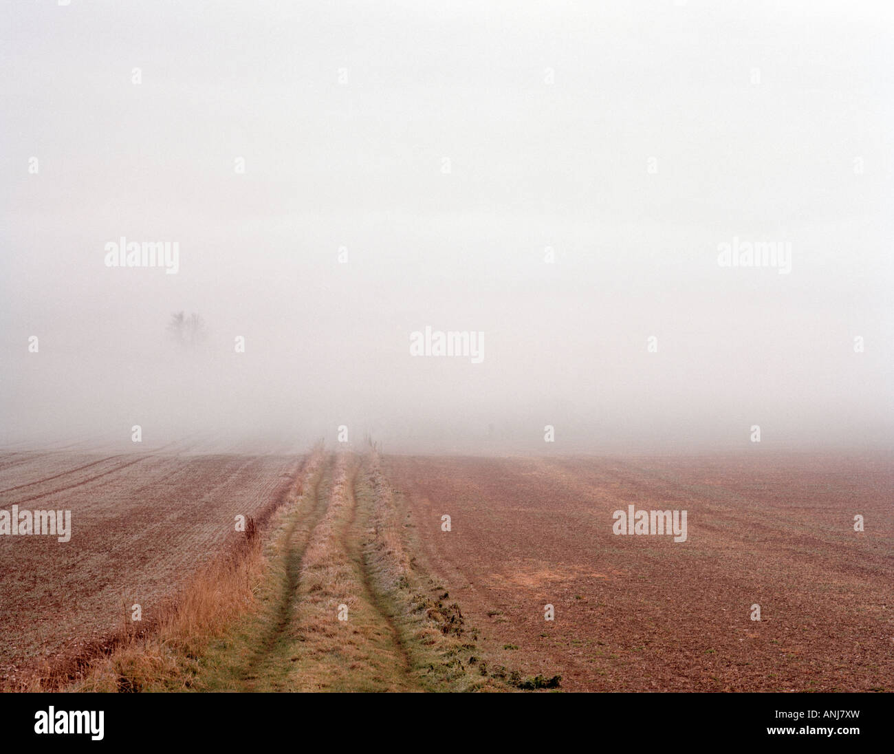 Bank of Fog in a field - Stock Image