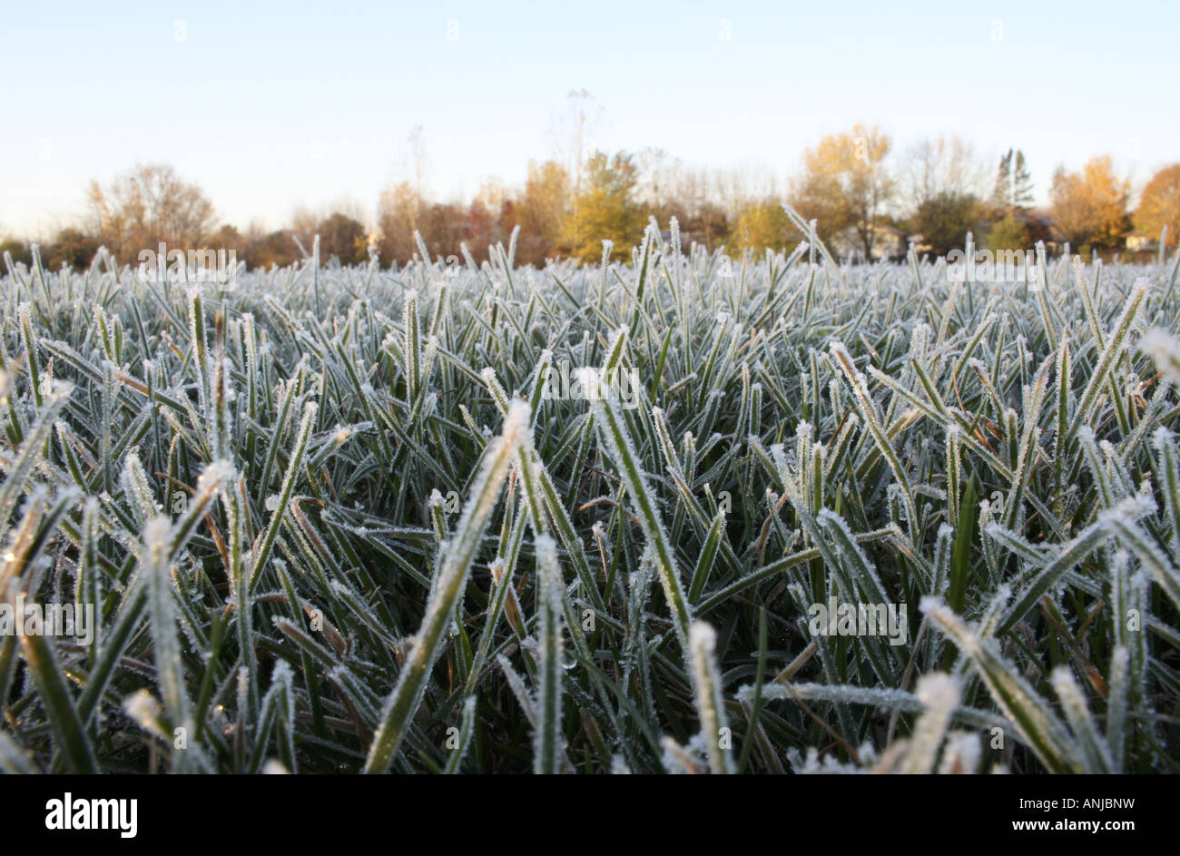Frost Formations on Grass in a Field - Stock Image