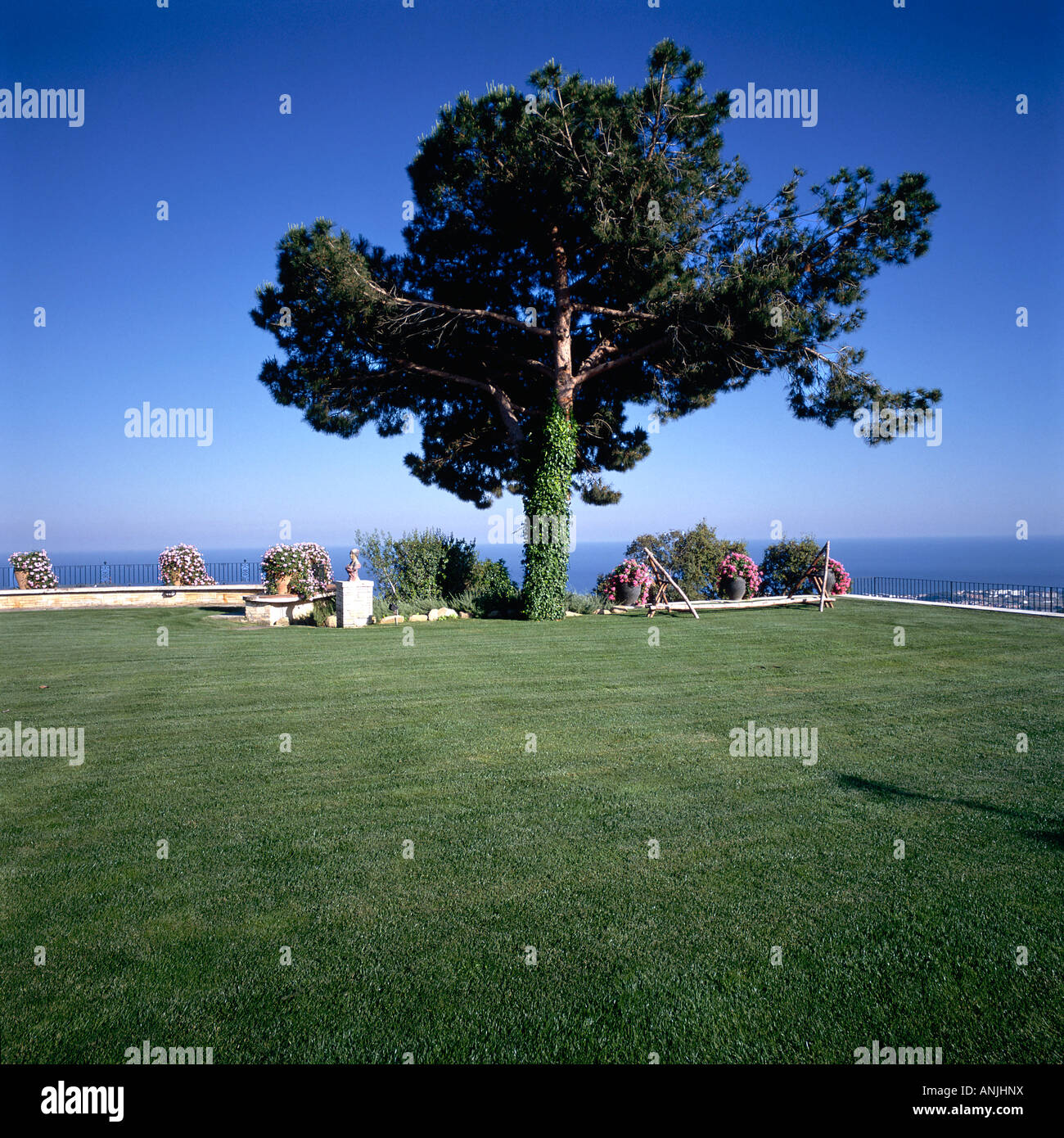 View of a tree at the periphery of a lawn - Stock Image