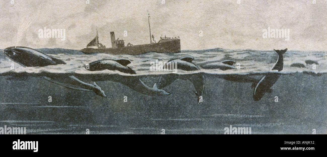 Folklore Sea Serpent - Stock Image
