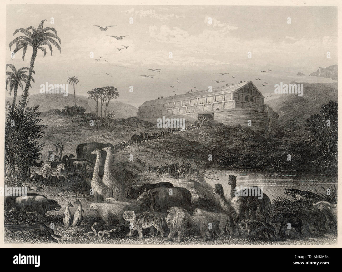 Animals Enter The Ark - Stock Image