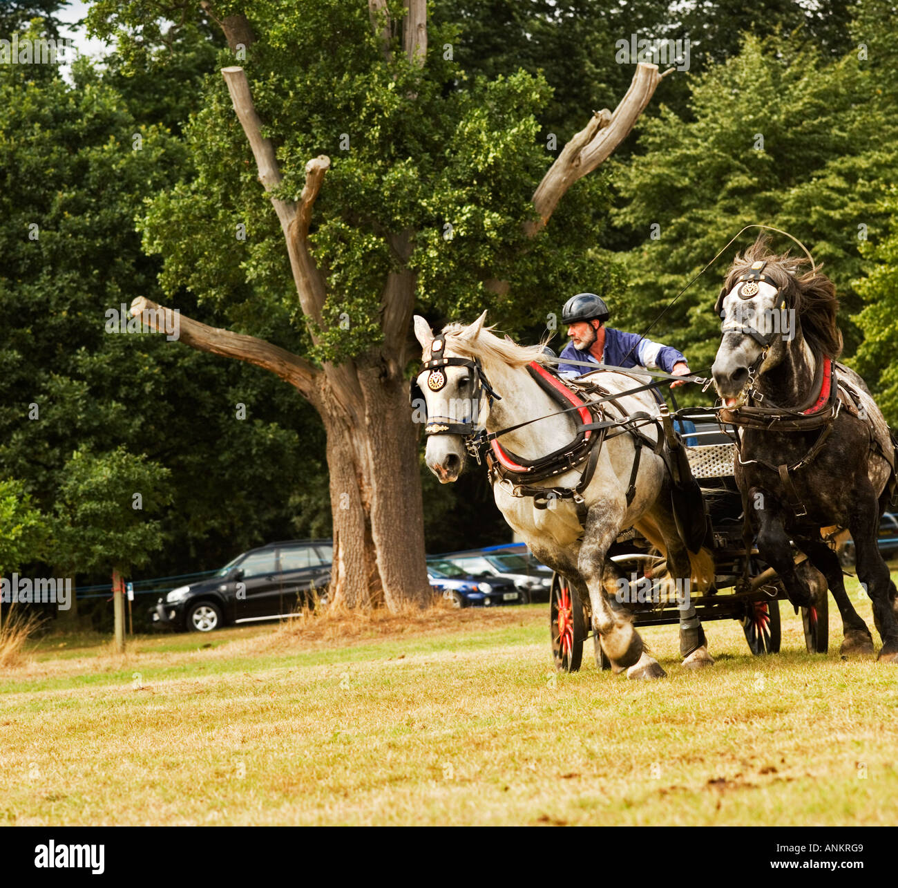 Hatfield Country Show England - Stock Image