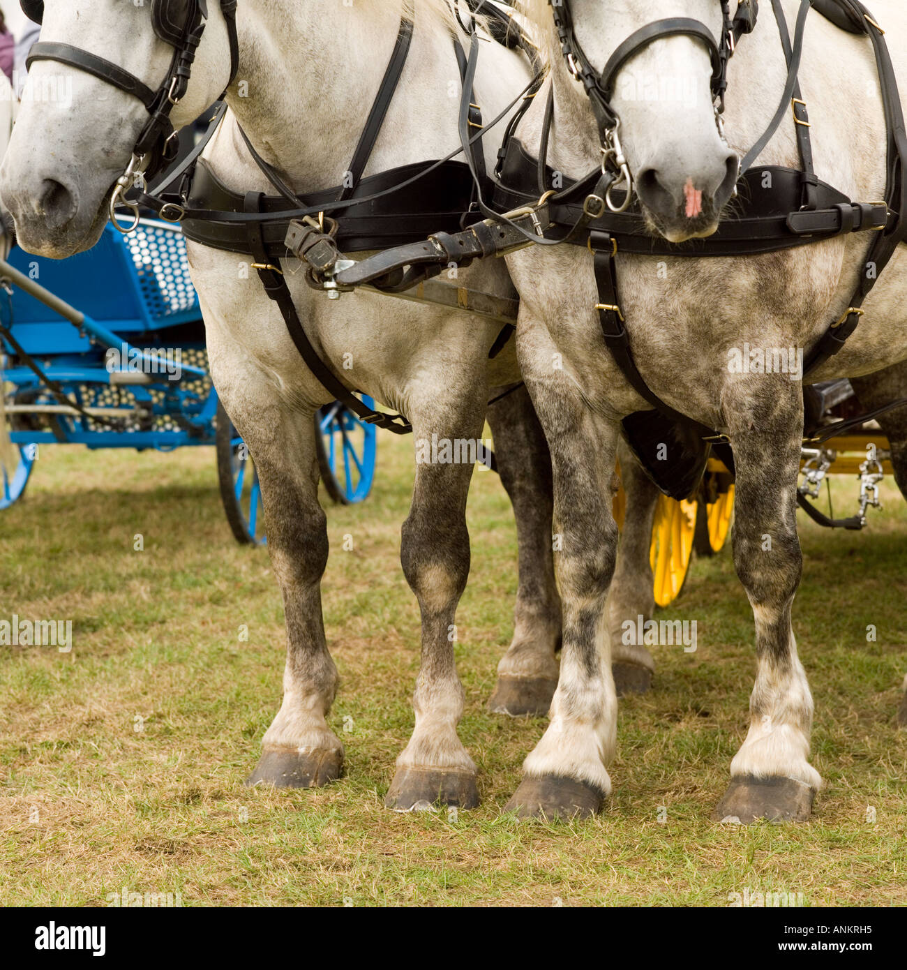 Hatfield Country Show - Stock Image
