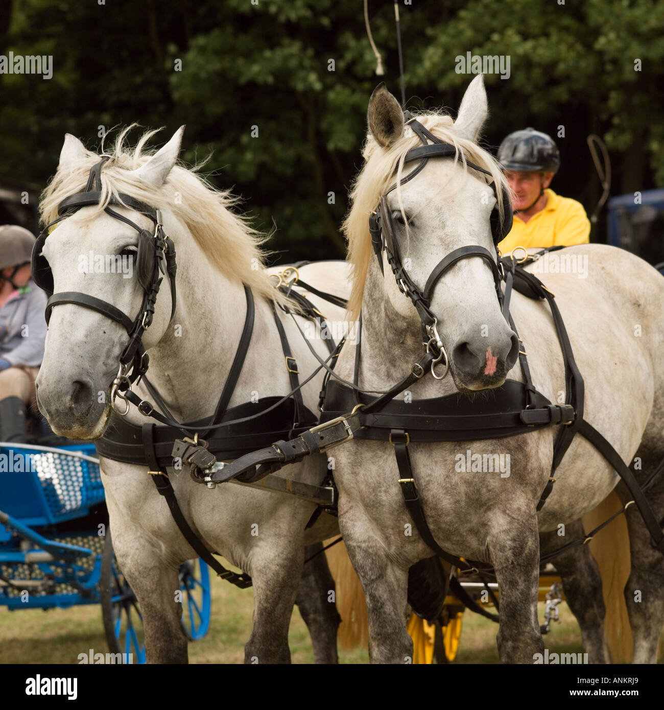 Hatfield Country Show. - Stock Image