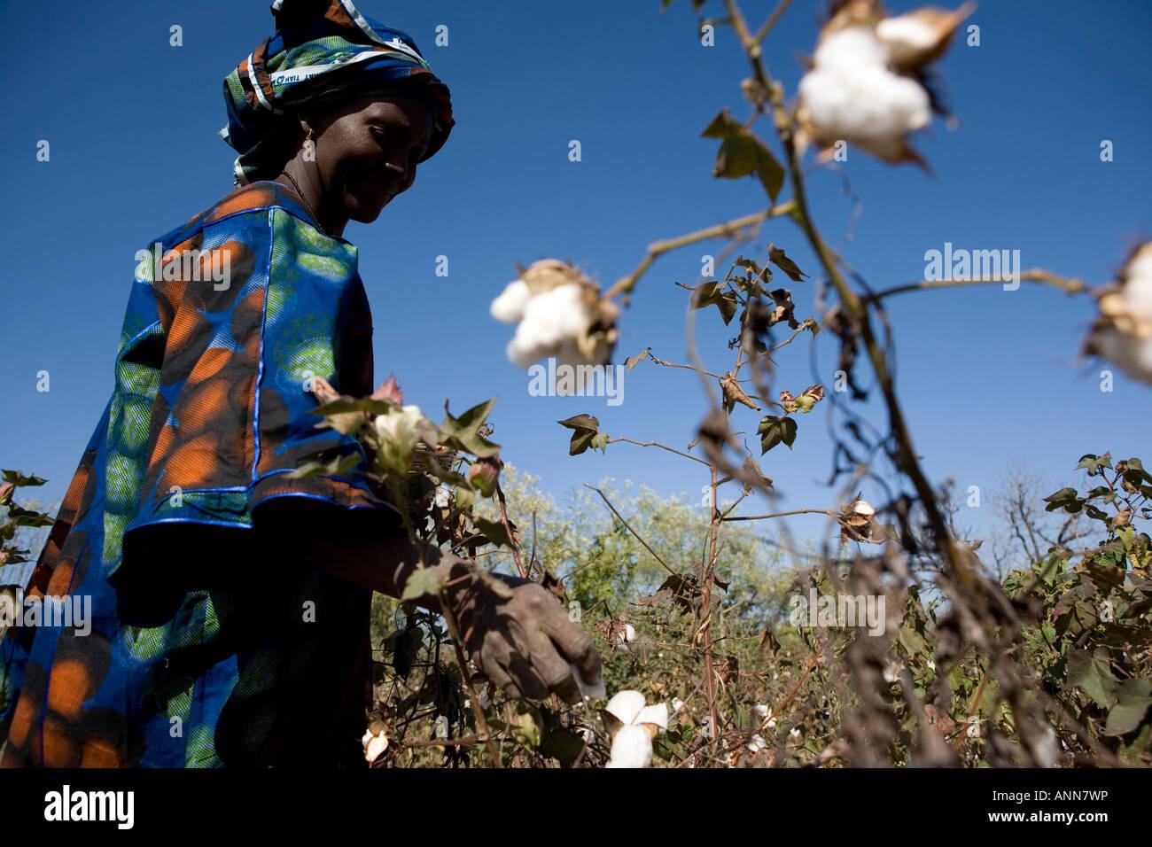 Bintou Dembele cotton farmer Djidian Mali - Stock Image