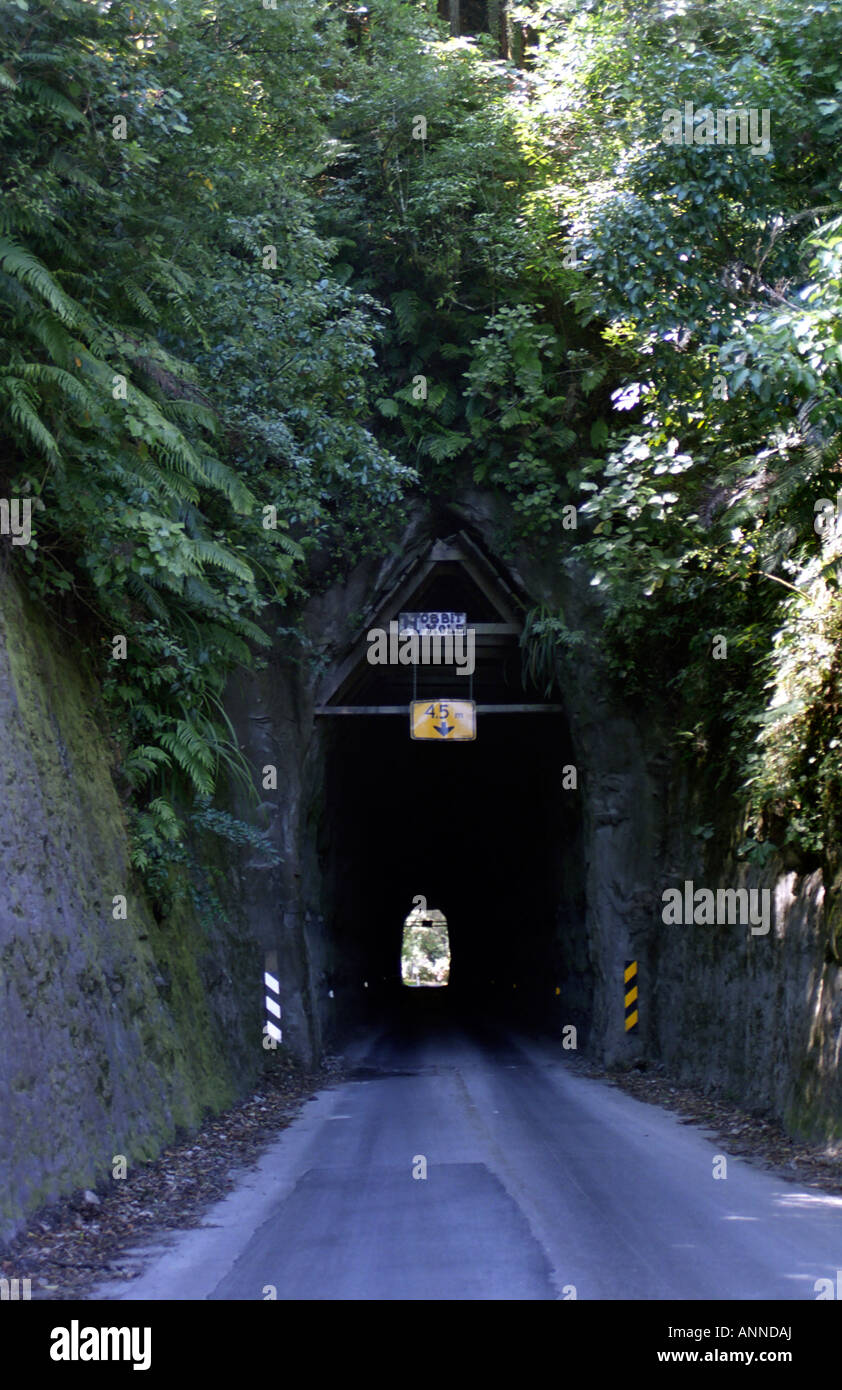 Hobbit Hole, a narrow tunnel on the Heritage Trail, North Island, New Zealand - Stock Image