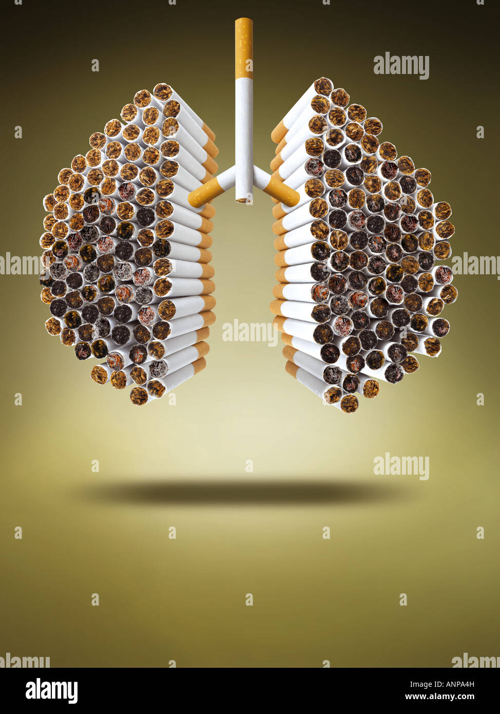 Lung made of cigarettes - Stock Image