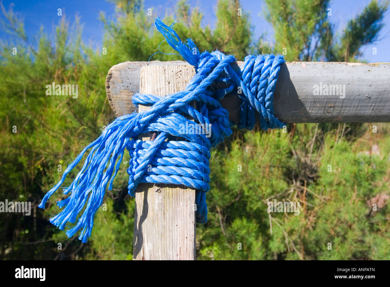 Two lengths of wood bound together at right angles with blue nylon rope - Stock Image