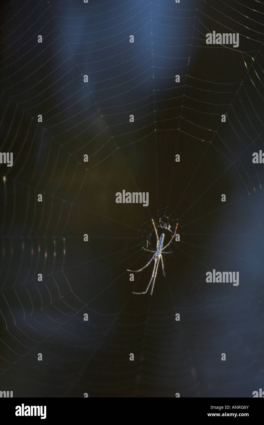 spider hanging upside down in center of web - Stock Image