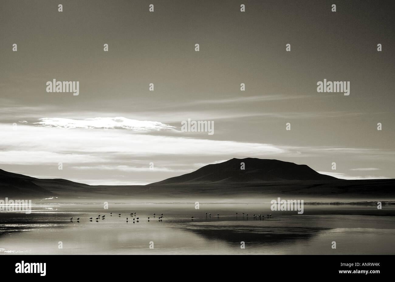 Flamingoes, Laguna Colorada, Bolivia - Stock Image