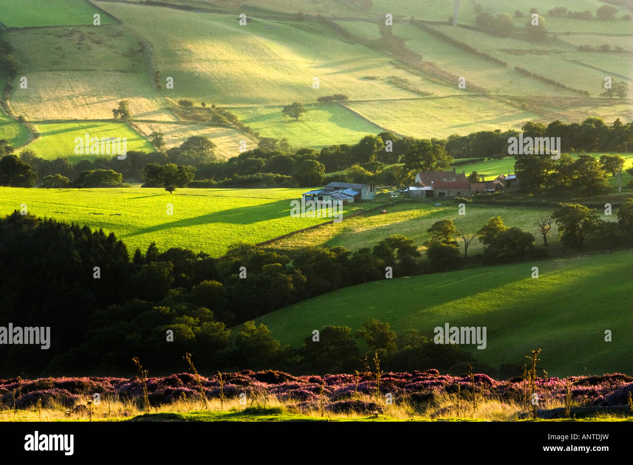 Head House farm in Farndale on the North York Moors in the late afternoon sun. Taken from Blakey Ridge. North Yorkshire, - Stock Image