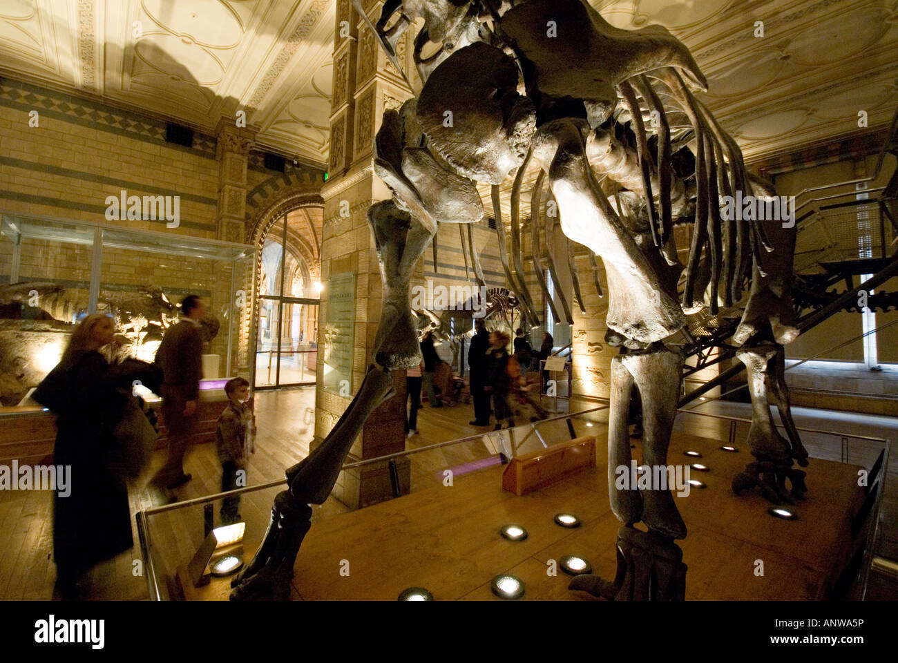 Natural History Museum dinosaurs London - Stock Image