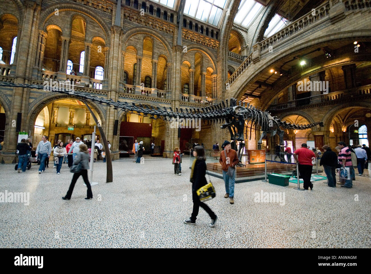 Natural History Museum main entrance room dinosaur London - Stock Image