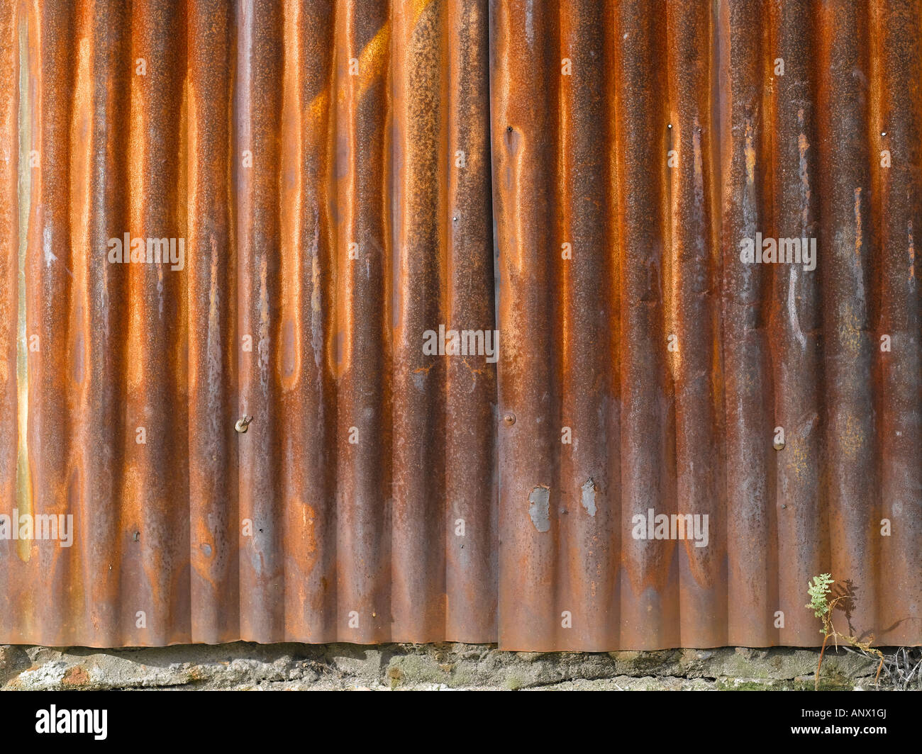 Rusty corrugated sheet - Stock Image