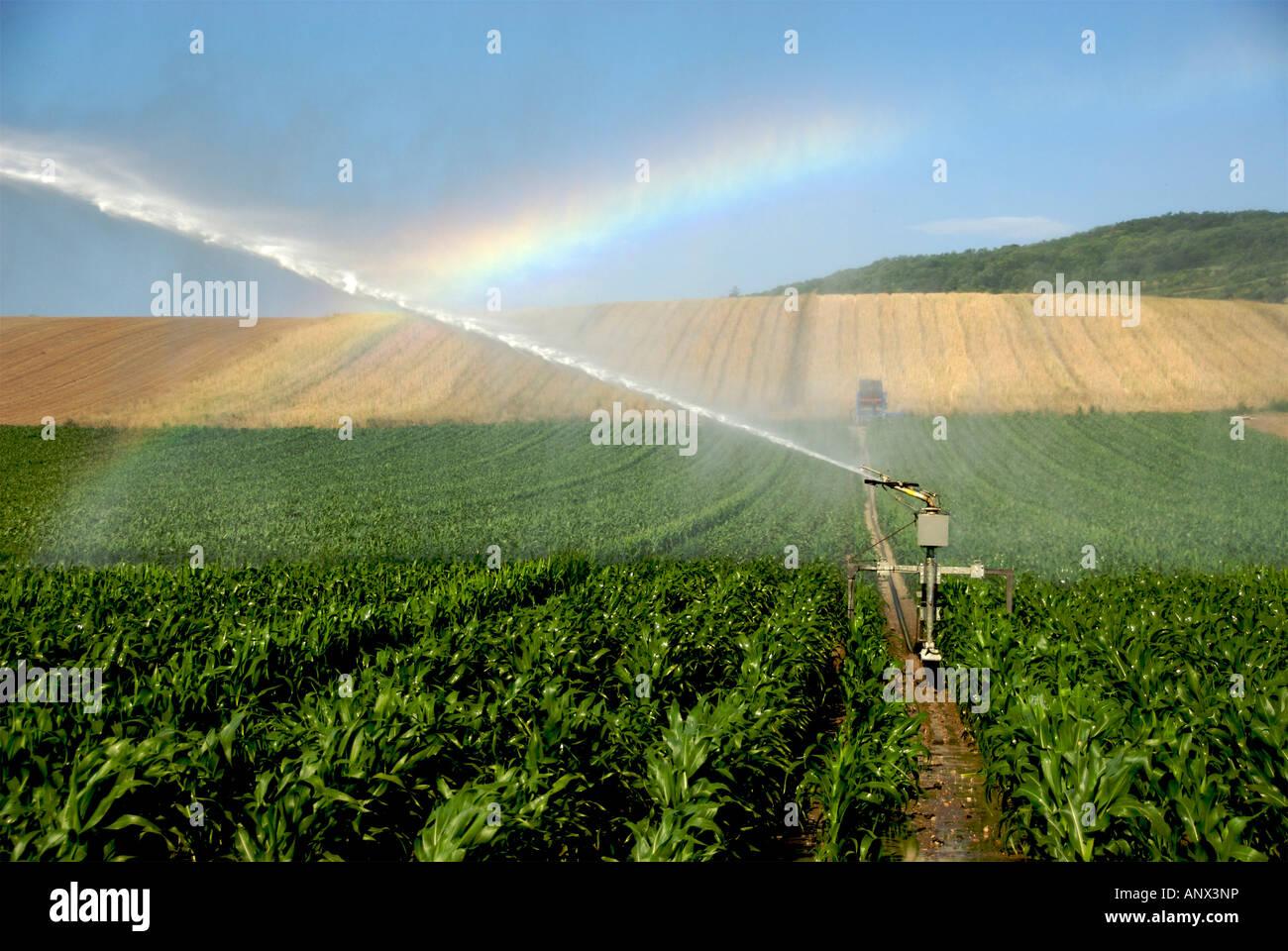 Sprinkler installation in a field of maize, Limagne, Auvergne, France, Europe - Stock Image